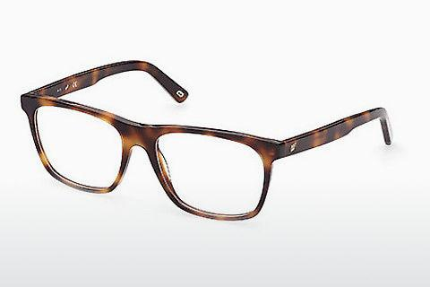 Lunettes design Web Eyewear WE5352 056